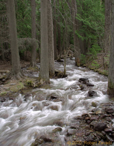 Photo of Jackson Creek in Glacier National Park