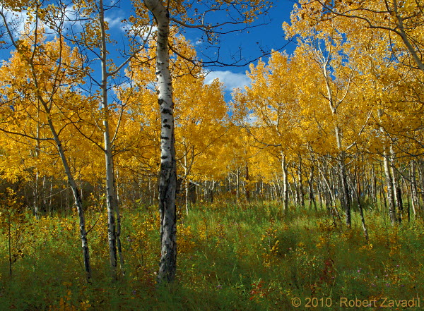 Photo of Aspen Grove