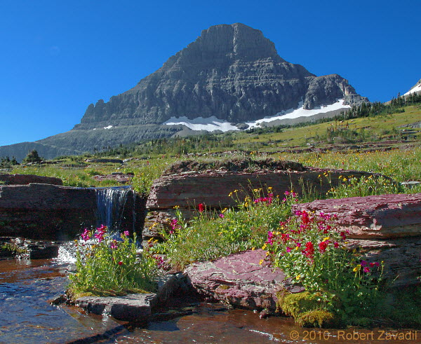 Photo of Alpine Garden in Glacier National Park