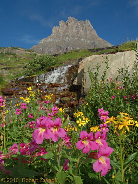 Photo of Monkeyflowers and Mount Clements in Glacier National Park