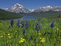 Photo of Two Medicine Camas in Glacier National Park