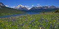 Photo of Two Medicine Wildflowers in Glacier National Park