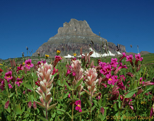 Photo of Wildflowers and Mount Clements in Glacier National Park